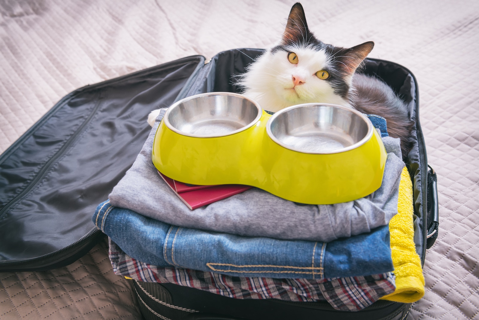 Cat sitting in the suitcase with close and pet food bowl