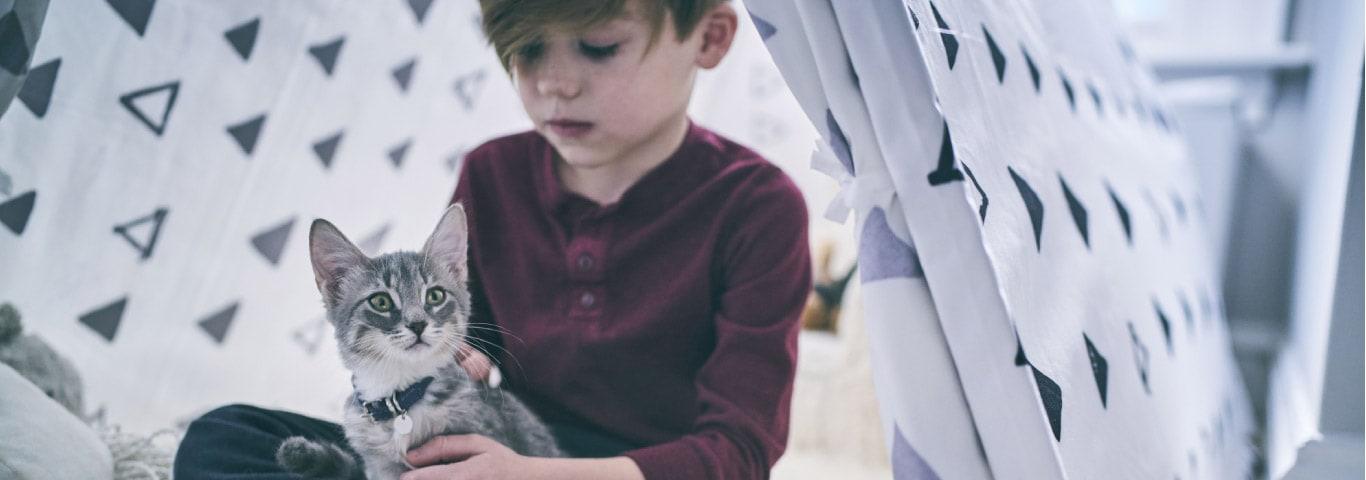 子猫のための重要な栄養素